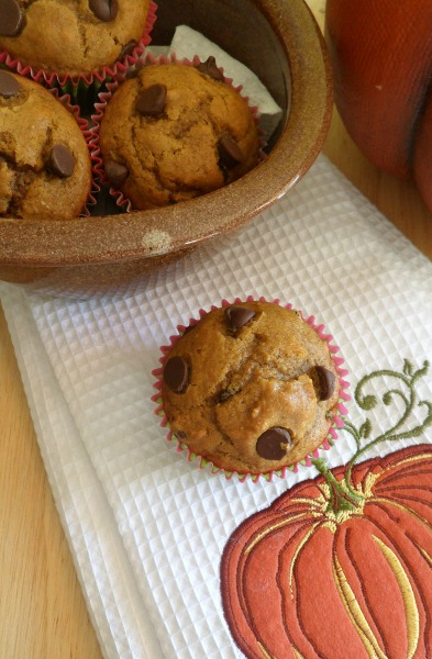pumpkin choc chip muffin